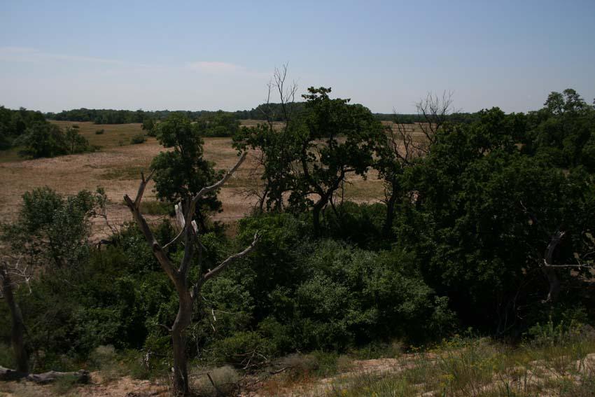Turist în România:  Pădurea Letea, în Delta Dunării