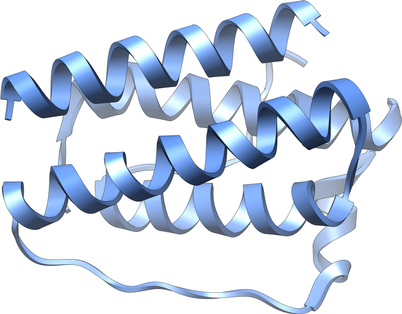 BIOLOGY CORNER – Leptina – hormonul care ajută la slăbit?