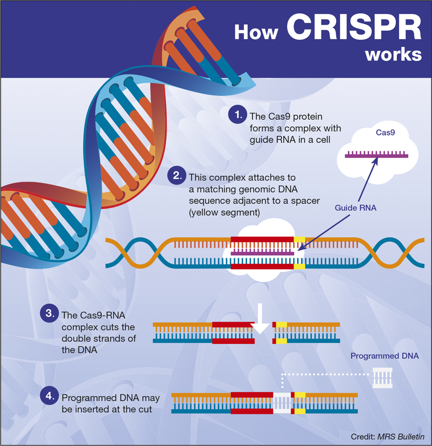 BIOLOGY CORNER – metoda CRISPR