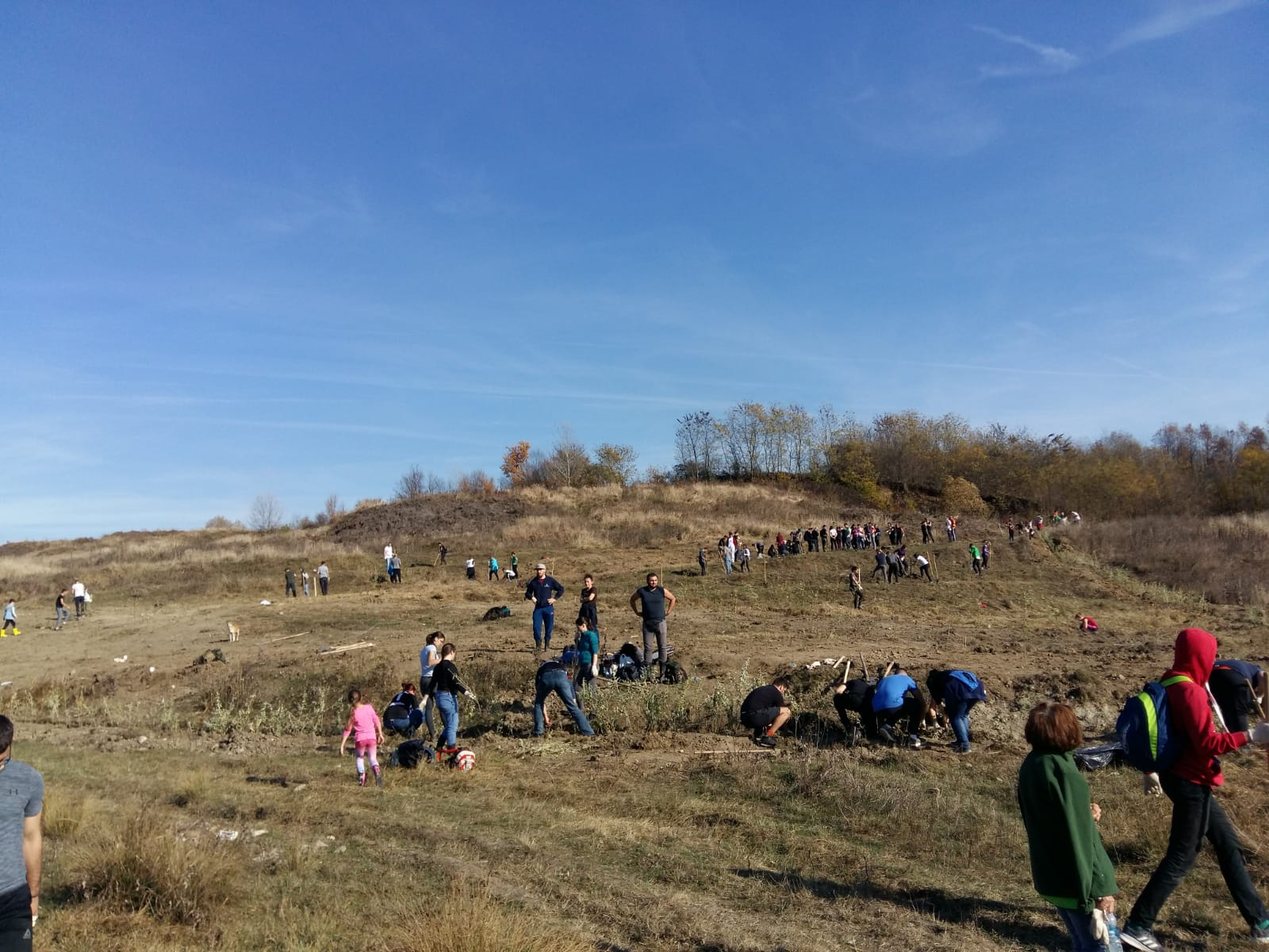 Preocupare pentru mediu. Plantăm Fapte Bune în România
